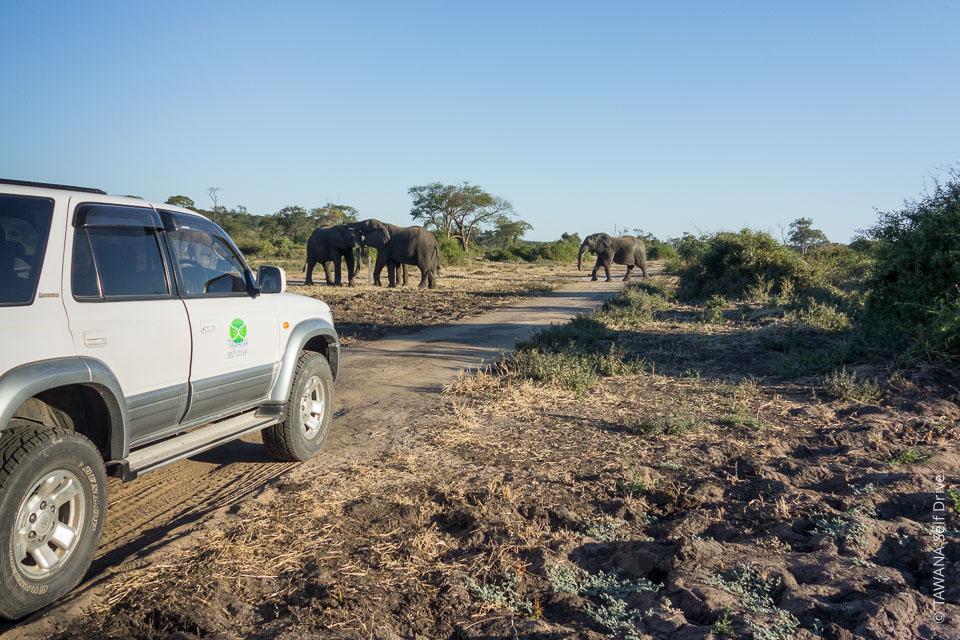 Visit Chobe: self-drive safari in the park