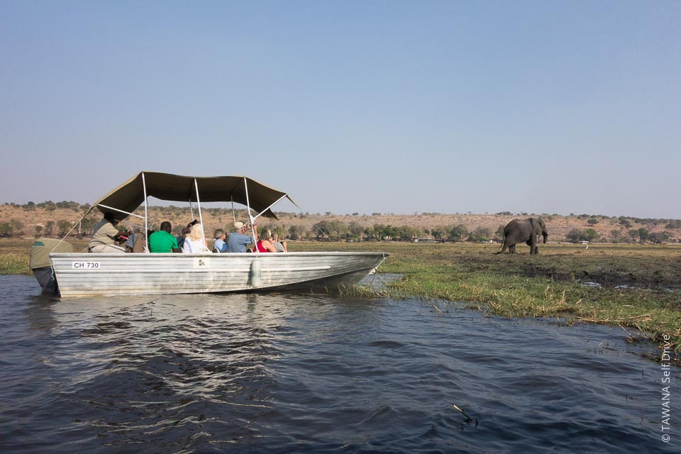 Visit Chobe: boat cruise on the river