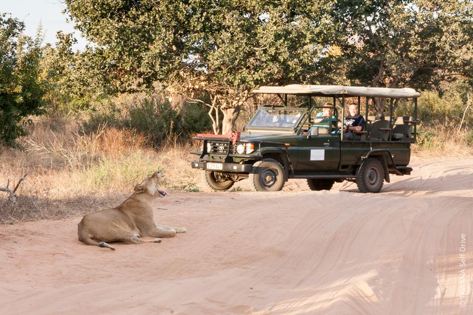 Visit Chobe: game drive in the park
