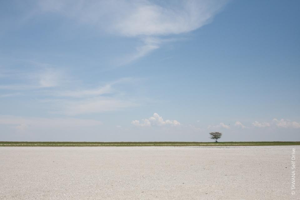 Self-drive adventure in Botswana: Sowa Pan