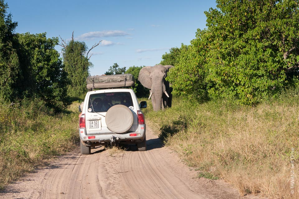 self-drive safari in Chobe